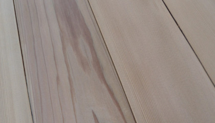 Sample of Douglas Fir